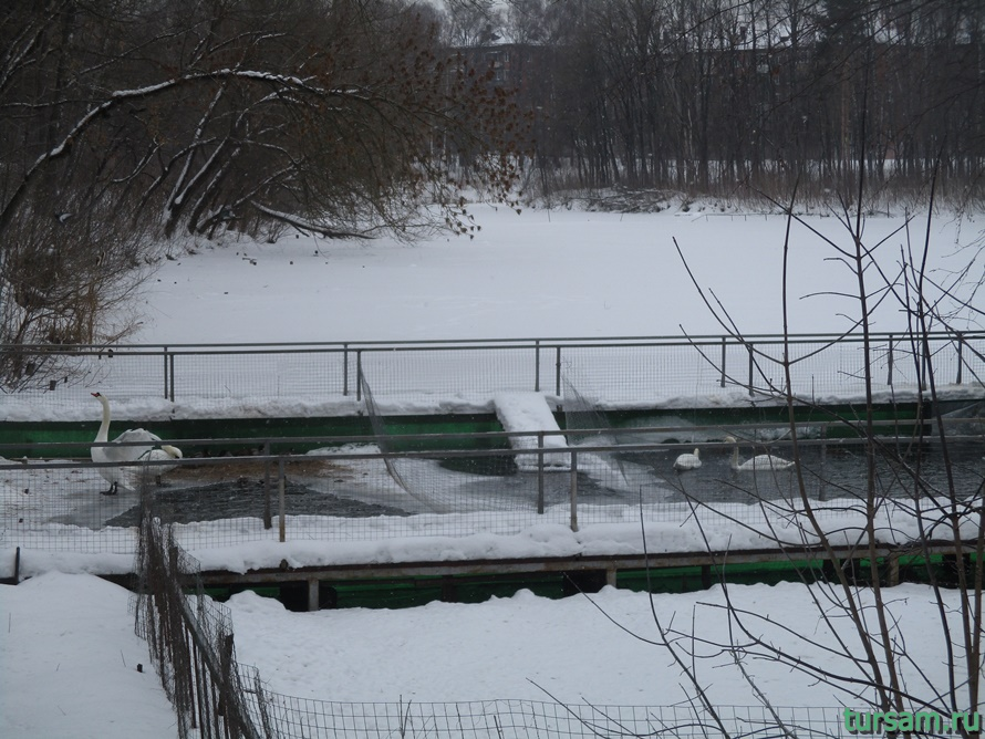 Зооуголок в парке Белоусова-2