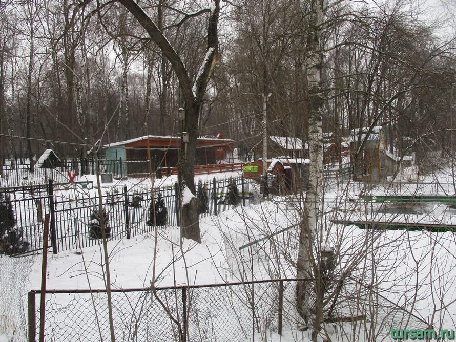 Зооуголок в парке Белоусова-3