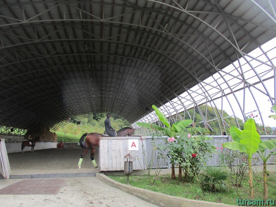 Ферма Экзархо в Сочи-11