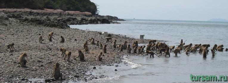 Остров обезьян в Тайланде